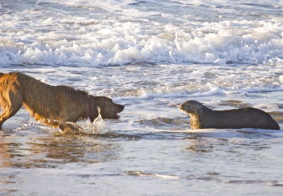 dog and sea otter 400x278