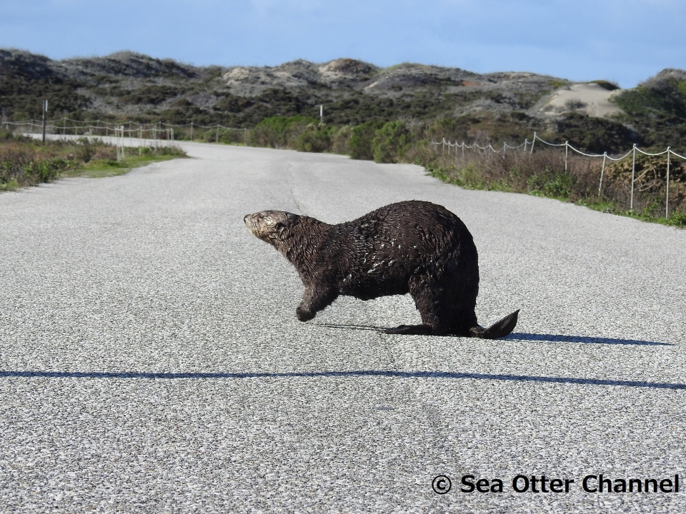Sea Otter Channel