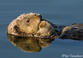 Sea Otter Savvy Photography Workshop