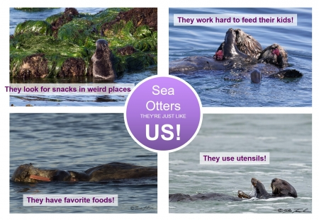 sea otter society food