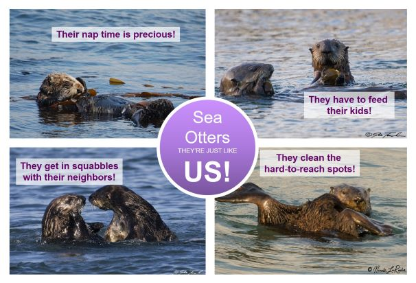 sea otter society intro