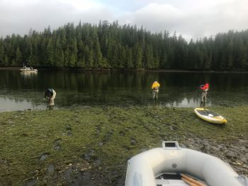 Researchers from Apex Predators, Ecosystems, and Communities (APECS) collect data in a SE Alaska eelgrass bed. Photo by Nicole LaRoche