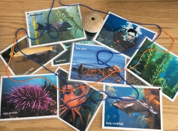 school kelp connection cards 350x259